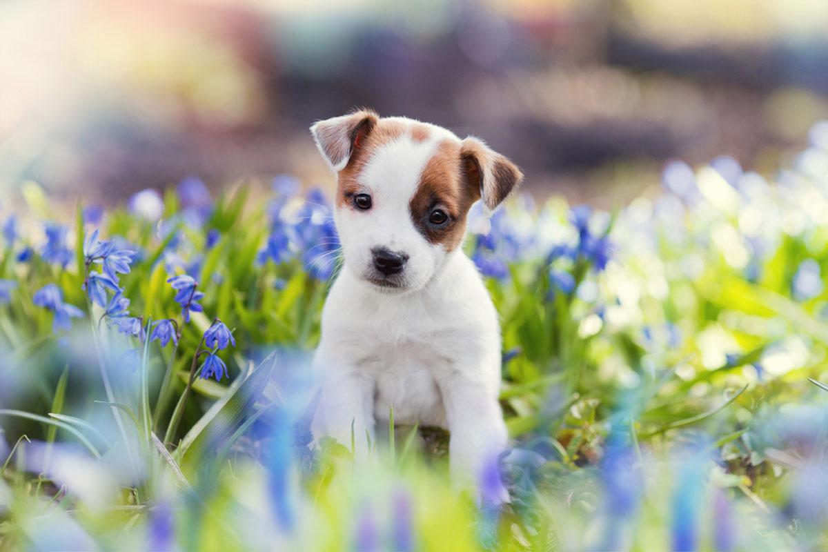 Fotografía de mascotas de lindo perro en campo de flores